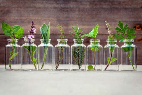 Glass bottles with essential oil plants inside them