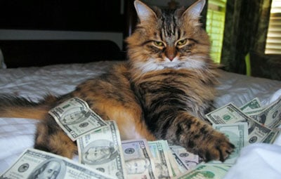 cat on a bed with cash