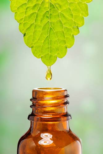 Essential oil dripping off a leaf into a bottle