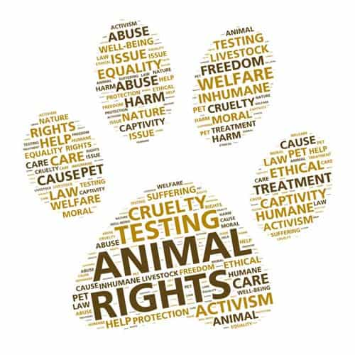 Paw print word cloud for animal rights and ethical treatment