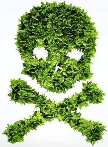 Grass skull and crossbones