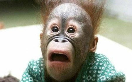 A monkey with a shocked look on its face