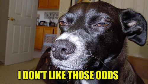 I don't like those odds dog