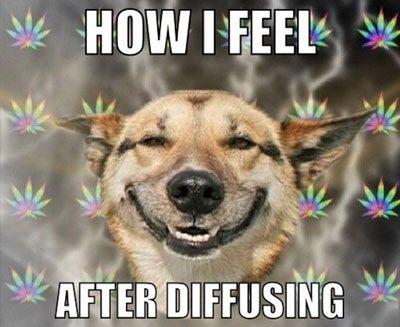 essential oil dog meme