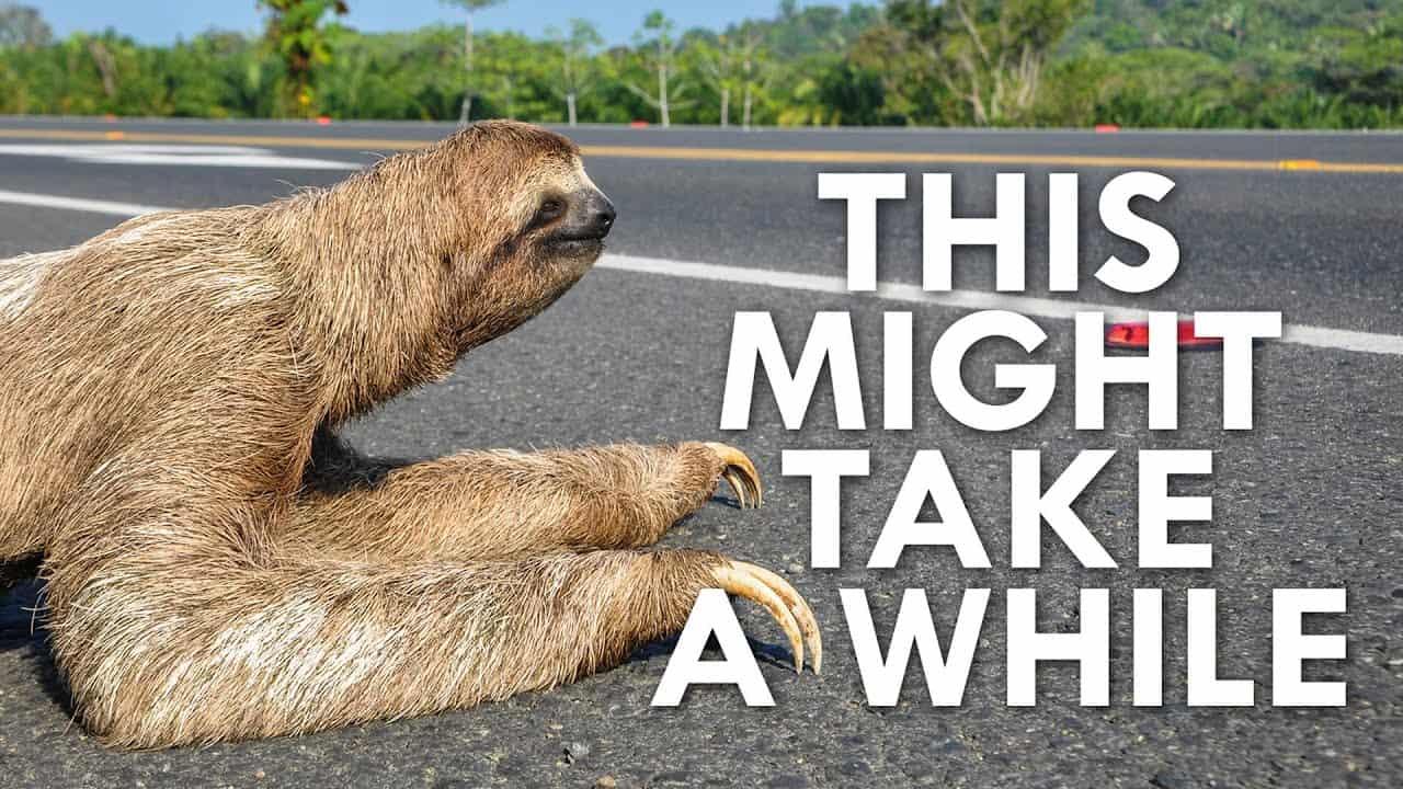 sloth crossing a road